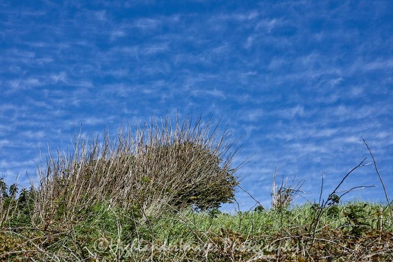 Sticks In The Sky