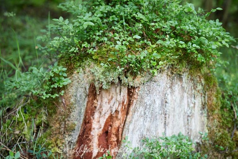 The Birks of Aberfeldy